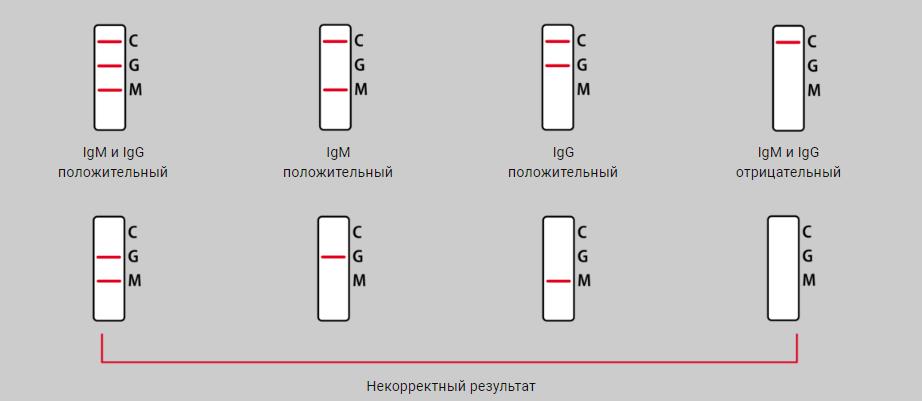XIAMEN BIOTIME интерпретация.png